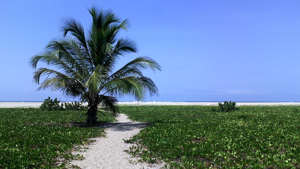 arvore praia