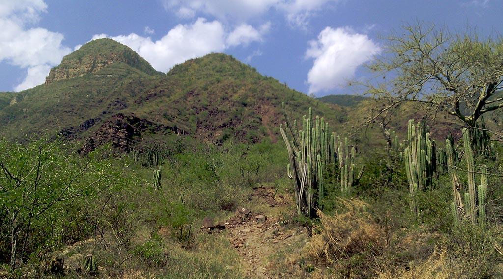 cactus montanhas