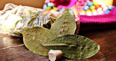 coca folhas