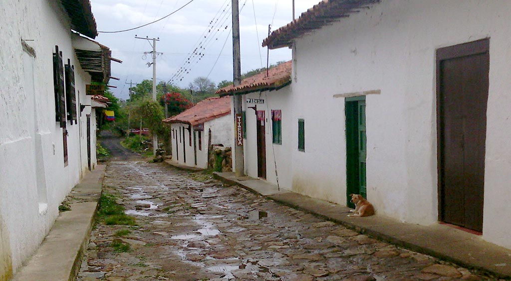 ruas cachorro guane colombia