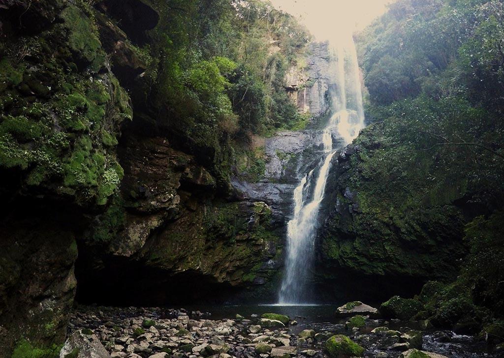 cachoeira arvores natureza