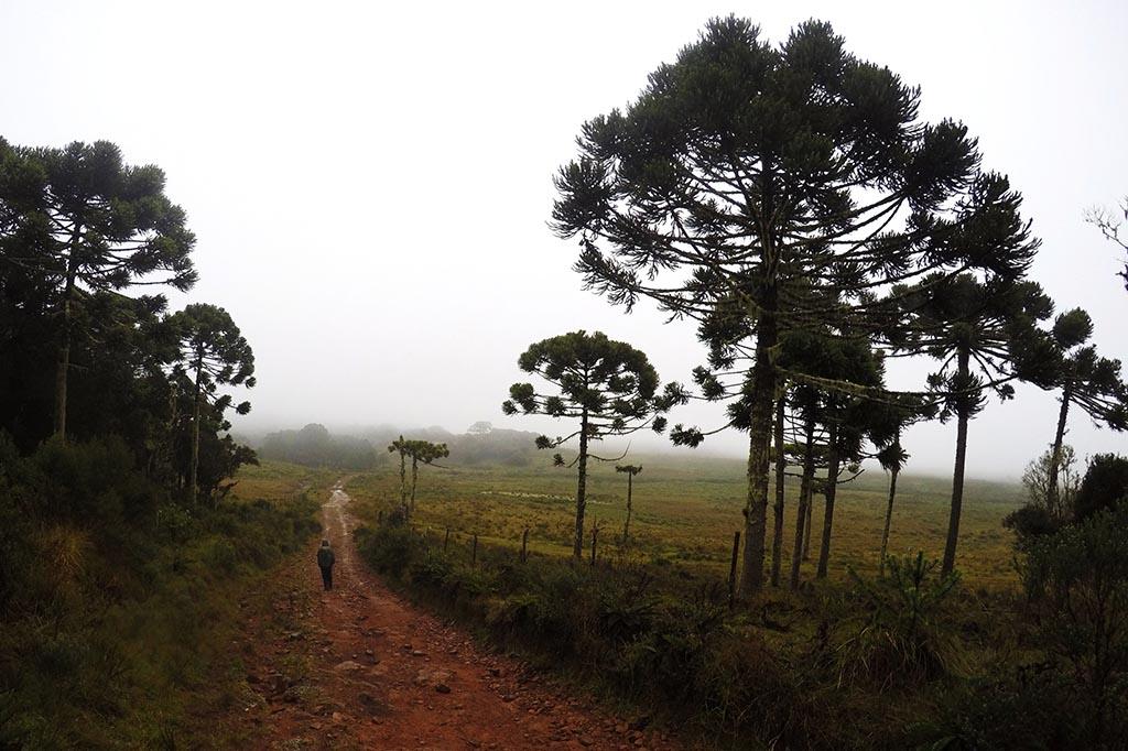 trekking rio grande do sul araucarias