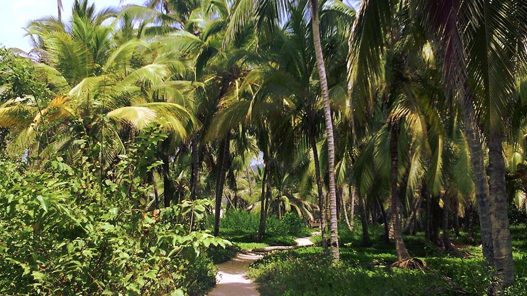 caminho palmeiras
